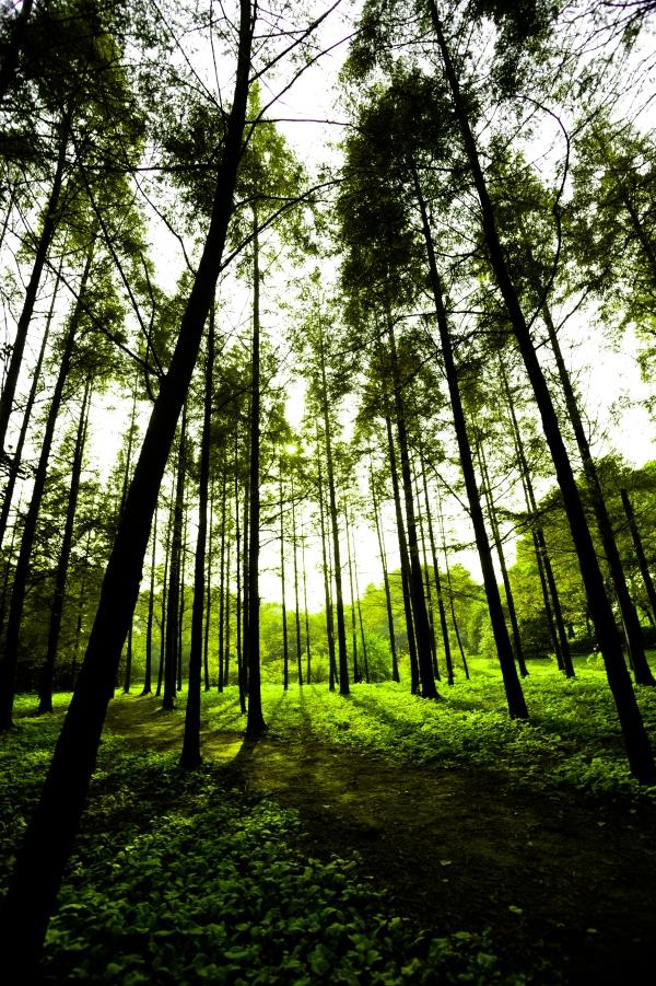 Wood Greens