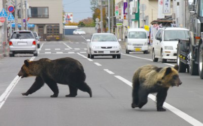 bears-in-town_682_1146959a
