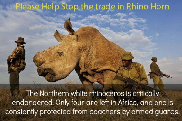 RhinoHelp