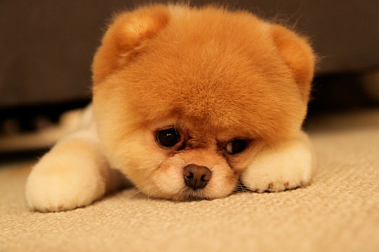 cute-dog-sad-face